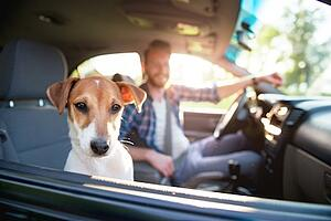 Celebrate National Dog Day San Antonio