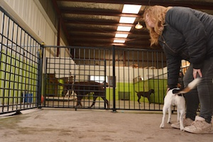 Pet Care Options When Going on Holidays