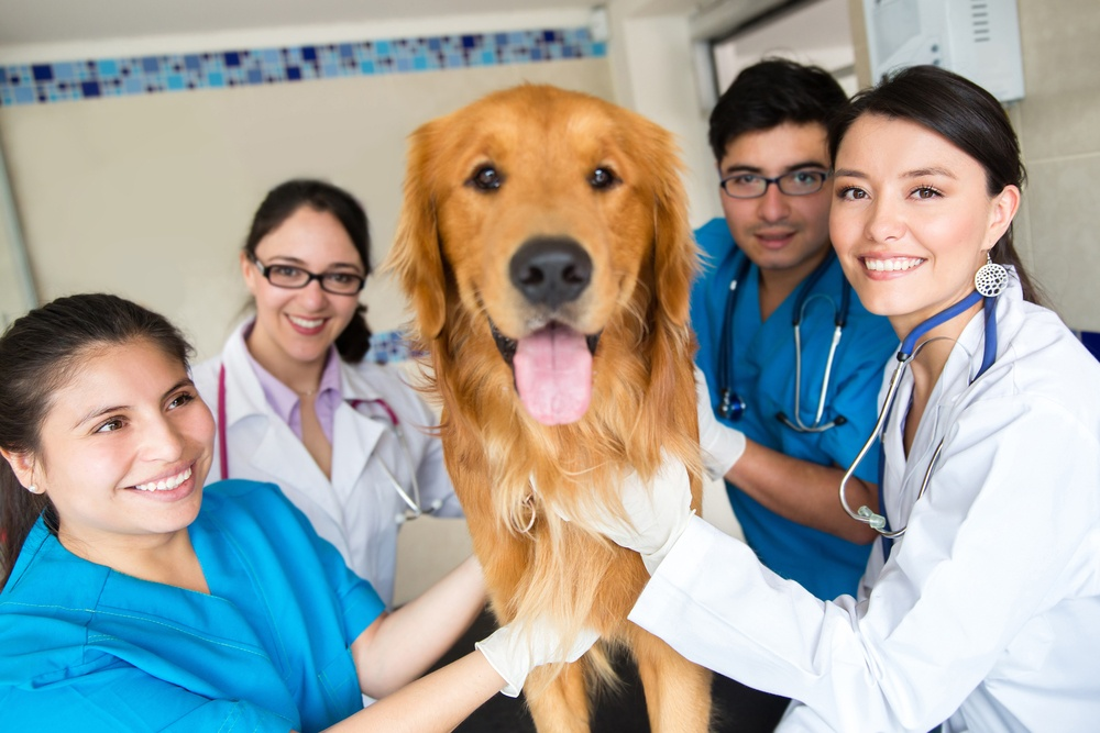 Group of doctors at the vet with a cute dog.jpeg